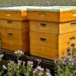 تشخیص-عسل-طبیعی